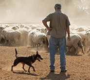 Civilmart Rural Sheep farmer and dog